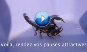 Pendant vos pauses MLM, détachez les vaches, sauvez les chiens des scorpions… (en VIDEO)